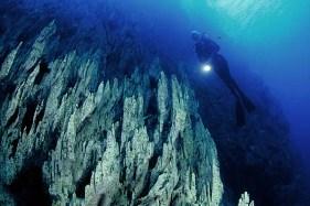 Il più vasto parco marino del mondo