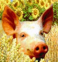 Perdita di gas...di un maiale