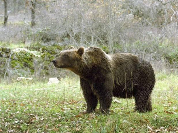 Trentino, un uomo ha aggredito un orso